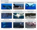 Marine Life Videos